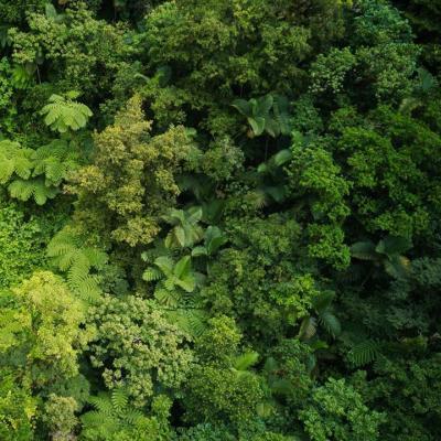 La Forêt tropicale, un milieu mystérieux !